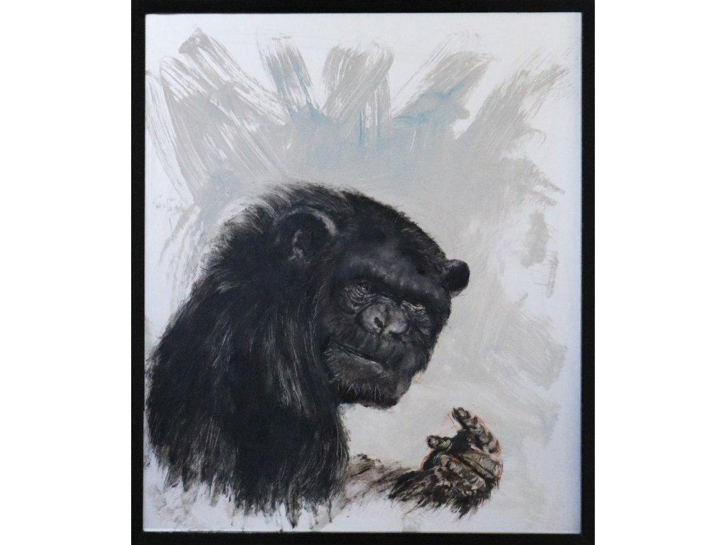 Portrét Opice 1