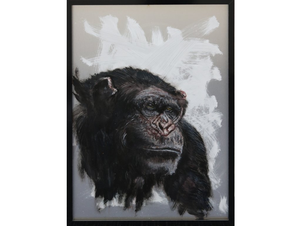 Portrét Opice 2