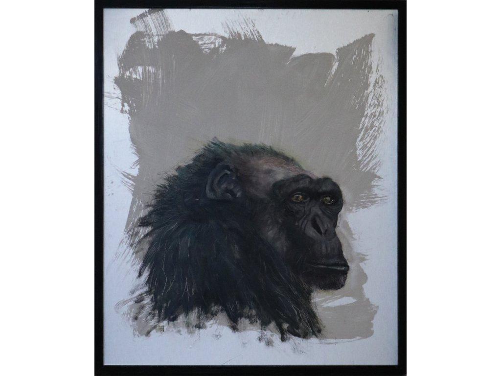 Portrét Opice 3