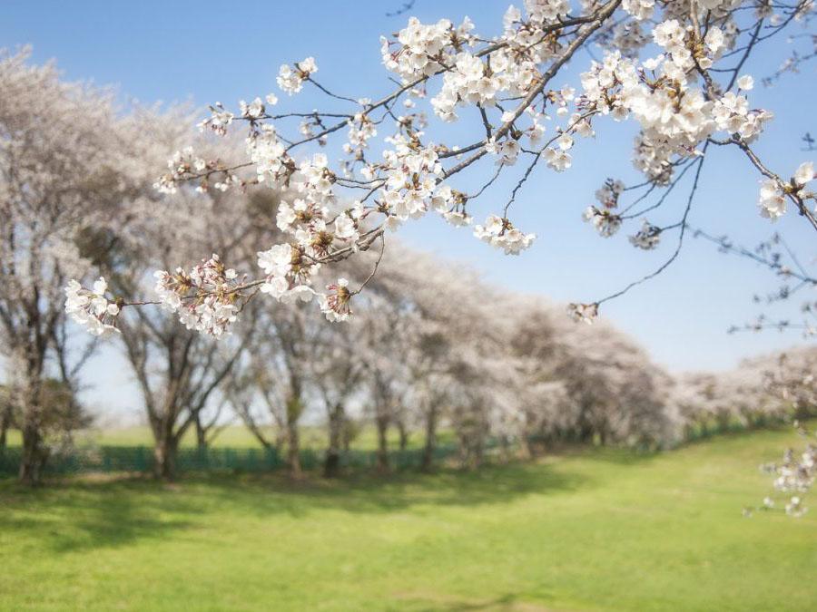 Doporučení pro brzké jaro (březen)