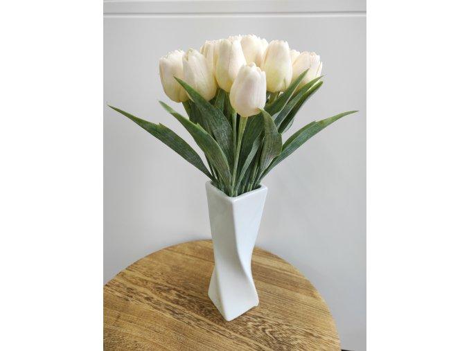 Tulipán smetanový  Tulipán smetanový