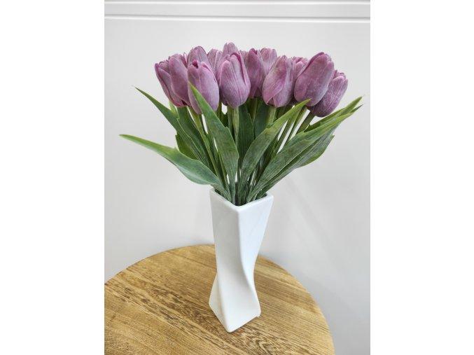 Tulipán fialový  Tulipán fialový