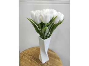 Tulipán bílý  Tulipán bílý