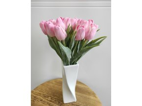 Tulipán bílorůžový  Tulipán bílorůžový