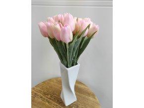 Tulipán růžovosmetanový  Tulipán růžovosmetanový
