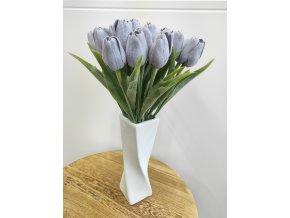 Tulipán šedý