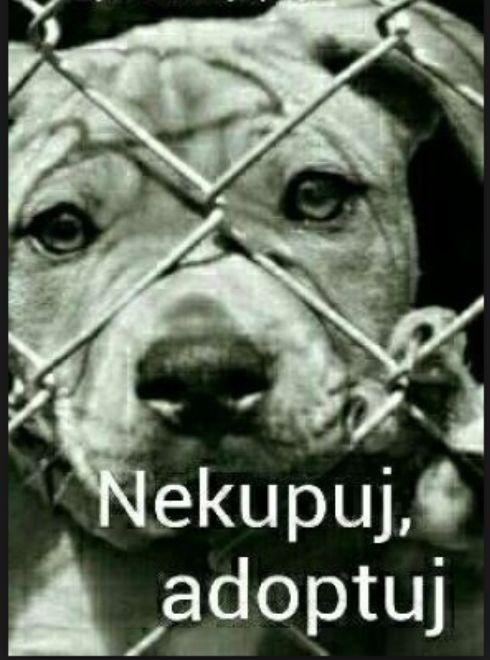 Nekupuj,adoptuj