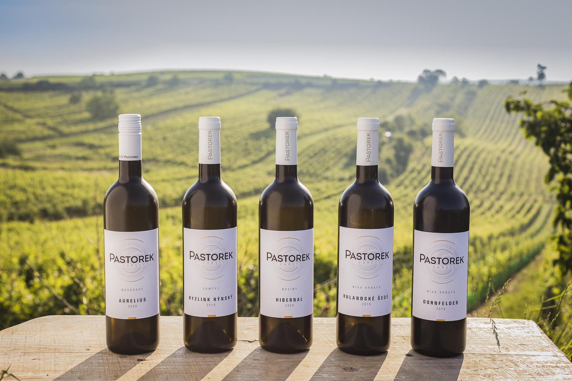 Vinařství Pastorek - Vinice