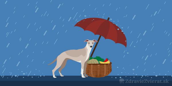 10 potravín, ktoré podporia zdravie vášho psíka