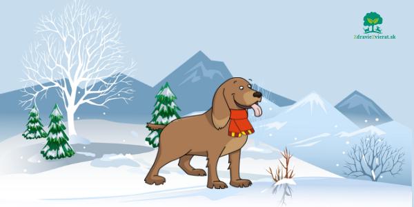 15 tipov na účinnú ochranu psíka v zimnom období