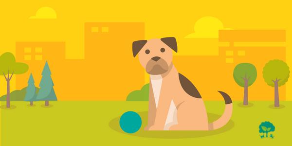 5 prírodných riešení alergií u psov