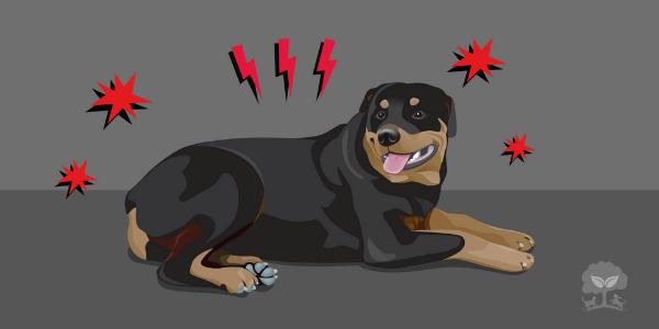 5 najčastejších príznakov bolesti u psov a mačiek (+ 8 byliniek na ich zmiernenie)