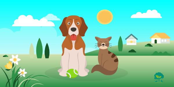 8 dôležitých látok pre jarnú podporu imunity psov a mačiek