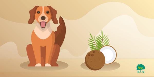 Kokosový olej pre psov? 10 dôvodov, prečo ho používať