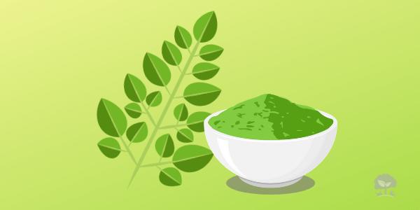 20 prínosov Moringy pre zdravie vášho zvieratka