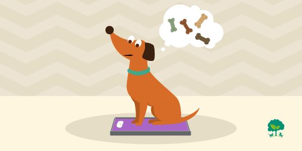 Prečo psi priberajú? 7 tipov ako predchádzať nadváhe a obezite