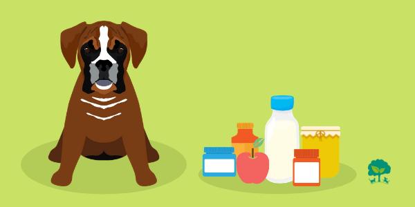 Potrebujú psi probiotiká aj prebiotiká?