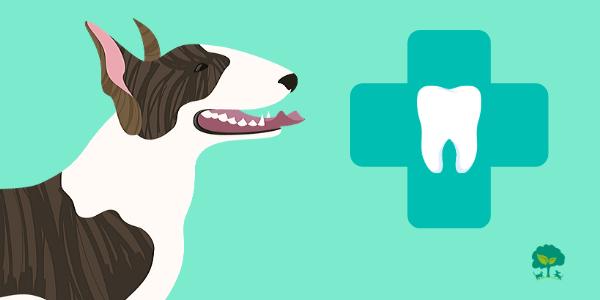 Príčiny ochorení zubov aďasien upsov: 5 tipovako im predchádzať