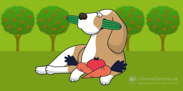 Zelenina pre psíkov? 10 dôvodov, prečo by mala byť v jedálničku vášho chlpáča