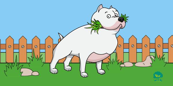 preco-psi-jedia-travu-tit