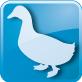 378_27_hypo-duck-1