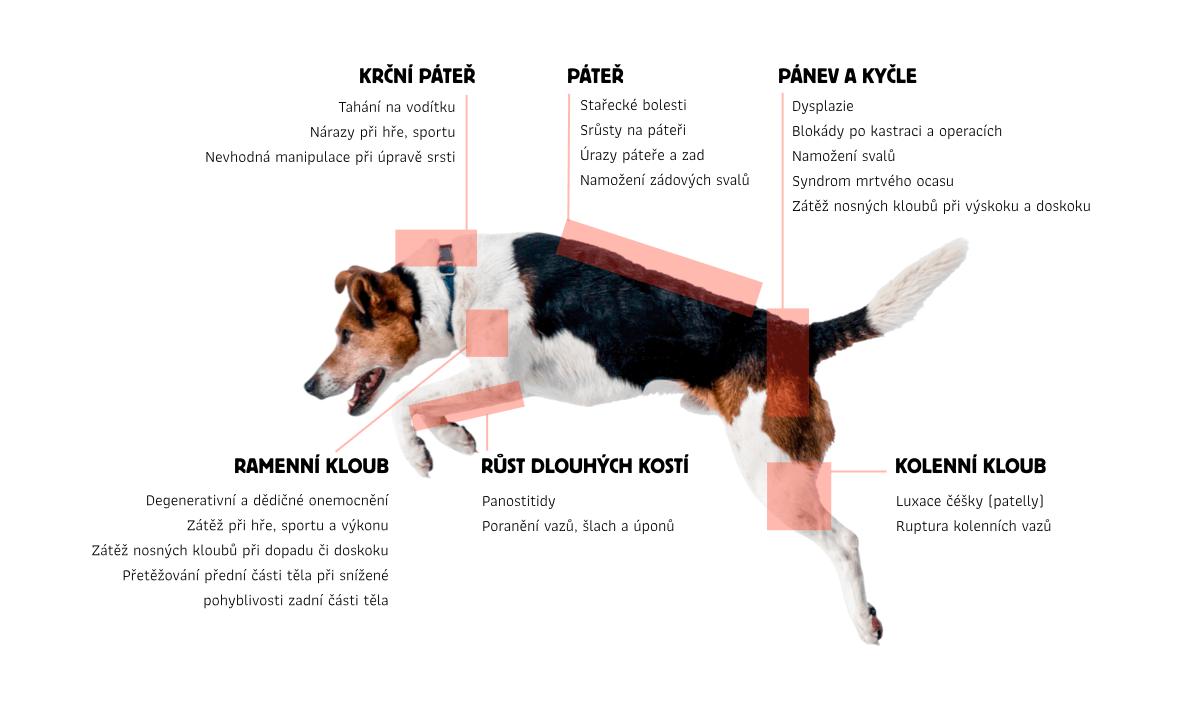 bolest_a_pohybovy_aparat_pes_dokonalalaska_infografika_boswelie