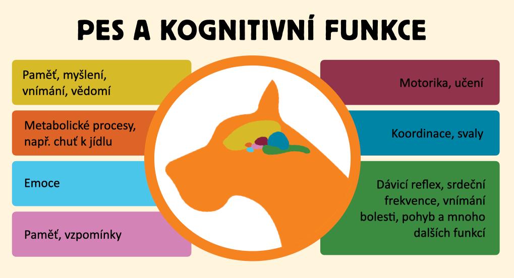 pes-a-kogn-funkce-cogniitiv.001