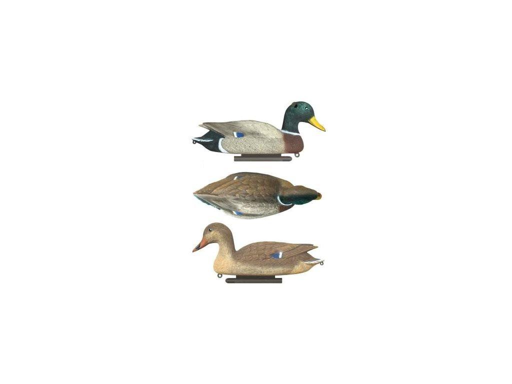 Balabán kačer/kachna oboustranná