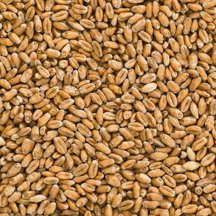 wheatmalt