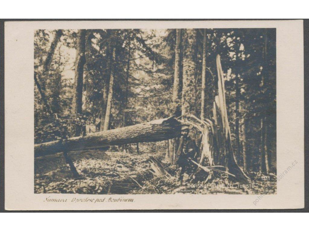 28 - Šumava, Boubínský prales, cca 1925