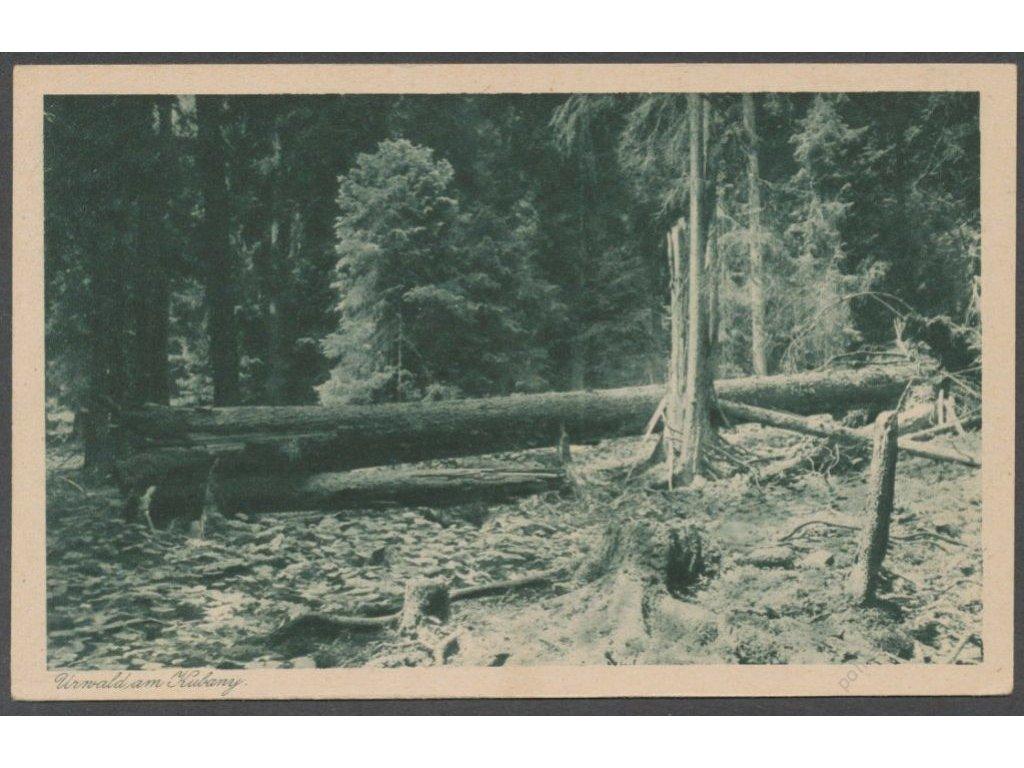 28 - Šumava, Boubínský prales (Urwald am Kubani), nakl. Streer, cca 1931