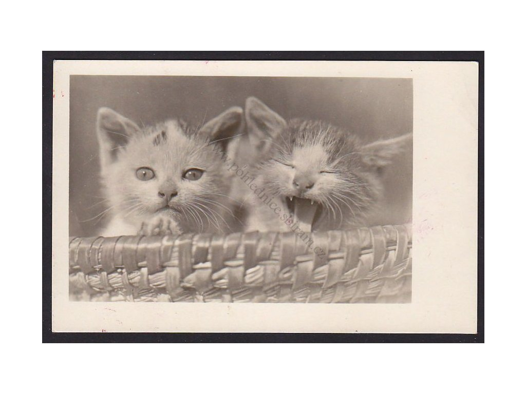 Dvě koťata ušatá, Foto Fon, ca 1925