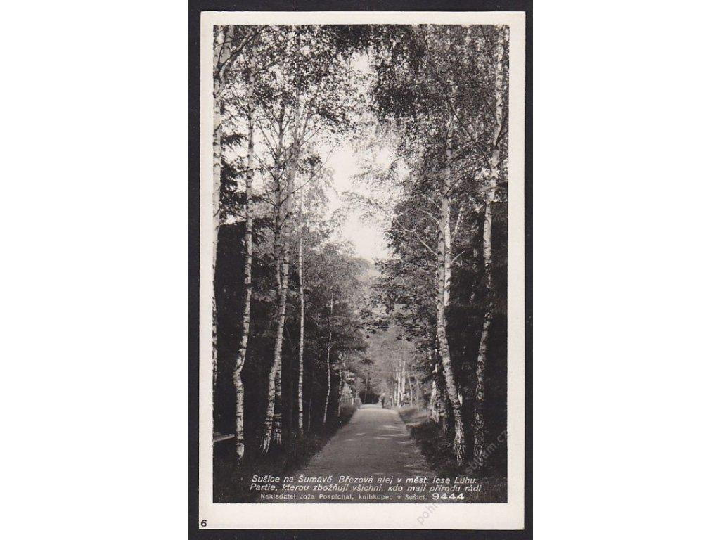 28- Šumava, Sušice , březová alej v Luhu, Foto Fon, ca 1930