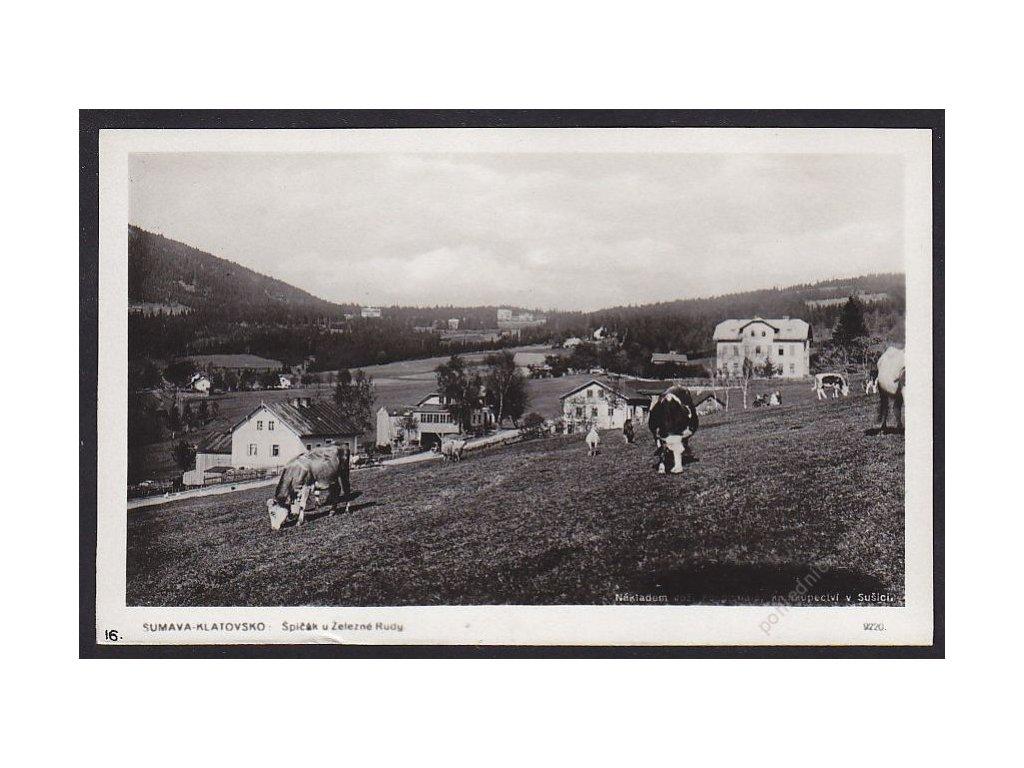 28- Šumava, Špičák, skot na pastvě, Foto Fon, ca 1930