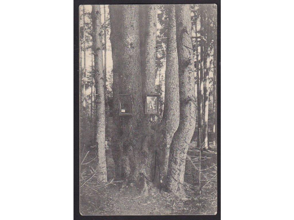 """46 - Písecko, v lese """"U pěti bratrů"""", nakl. Thorovský, cca 1908"""