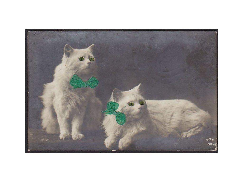Zvířata, kočky, cca 1912