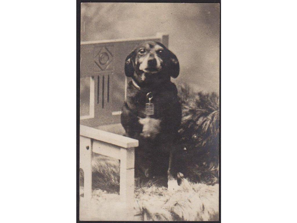 Zvířata, Psí miláček, cca 1930