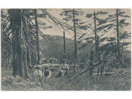 Německo, Lusenspitze 1372m, oživená partie z Národ. parku Bavorský les