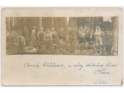 55 - Rakovnicko, Kněževes, oživená partie z chmelnice, cca 1920