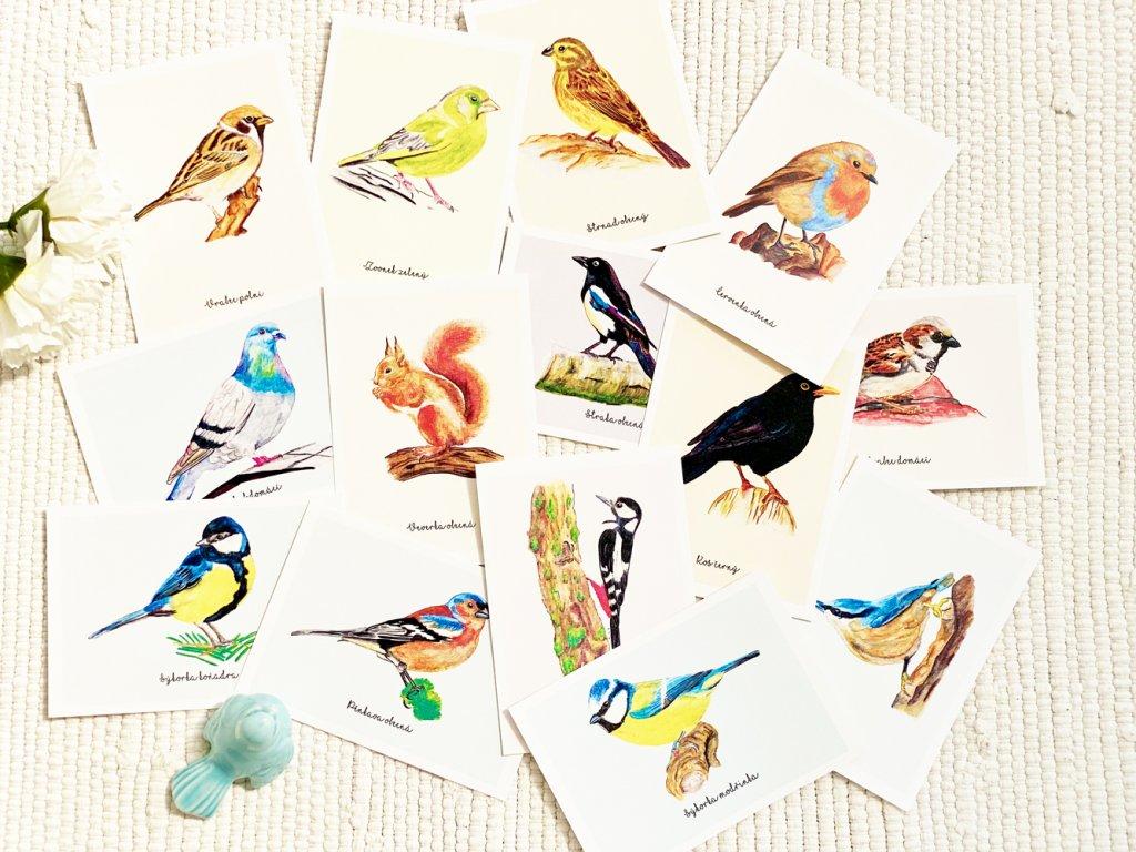 Sada pohlednic - Komplet ptáčci 14 ks