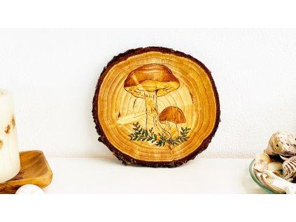 355 houby hriby