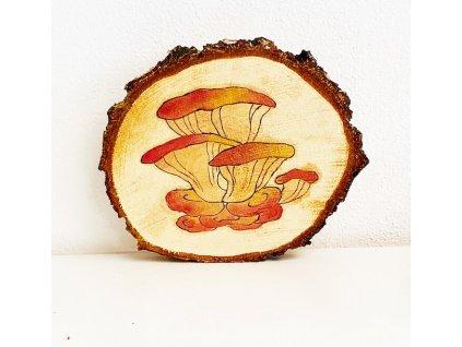 322 houby sirovec zlutooranzovy