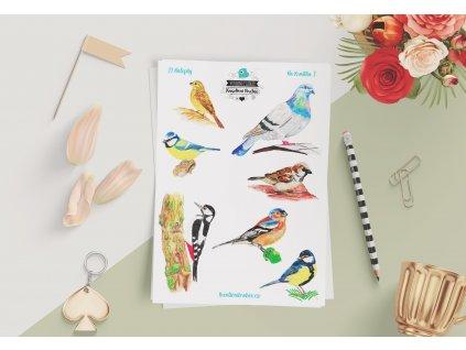Samolepky ptaci22
