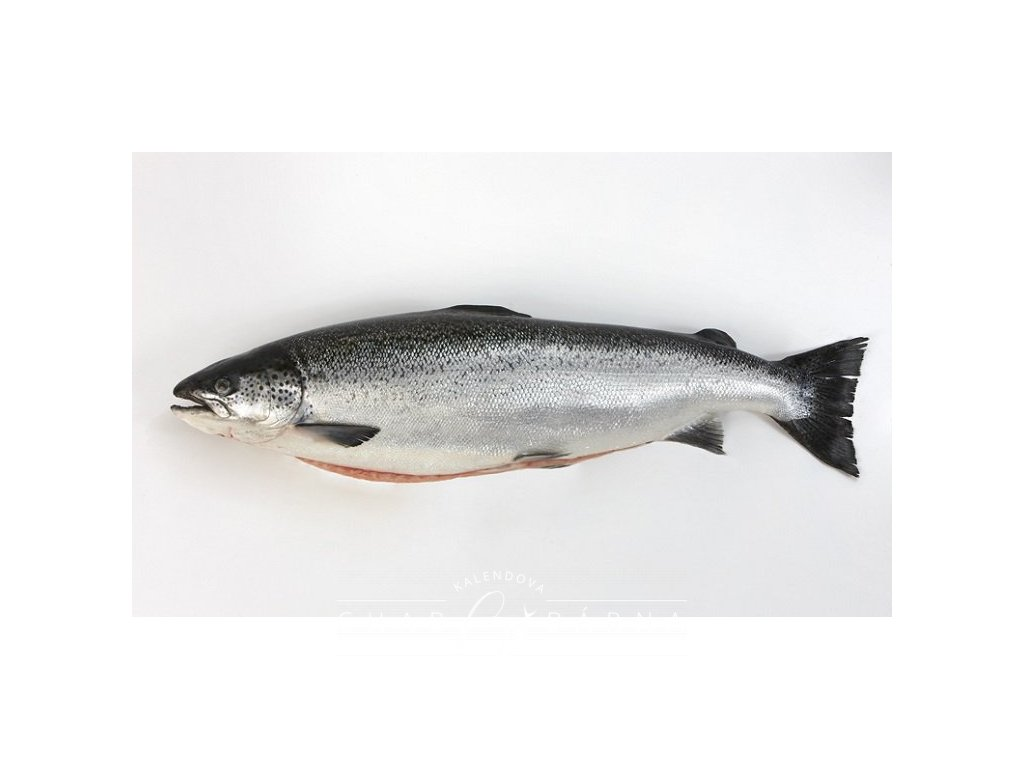 img Atlantic Salmon
