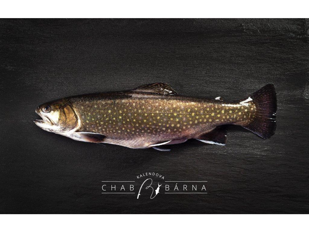 CHABRYBARNA 22 04 2020 9 cerstva ryba SIVEN
