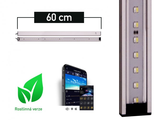 LANCIA1 plant 60