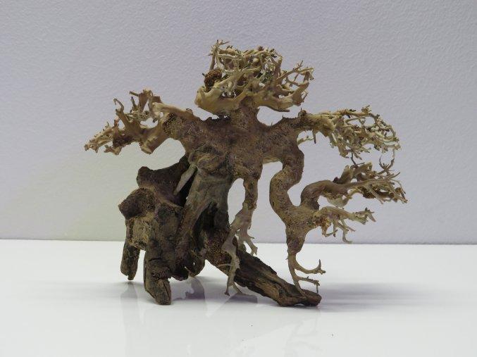 Bonsai wood S (BW35811)