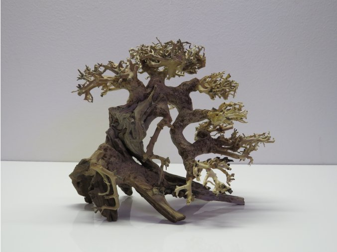 Bonsai wood S (BW35813)