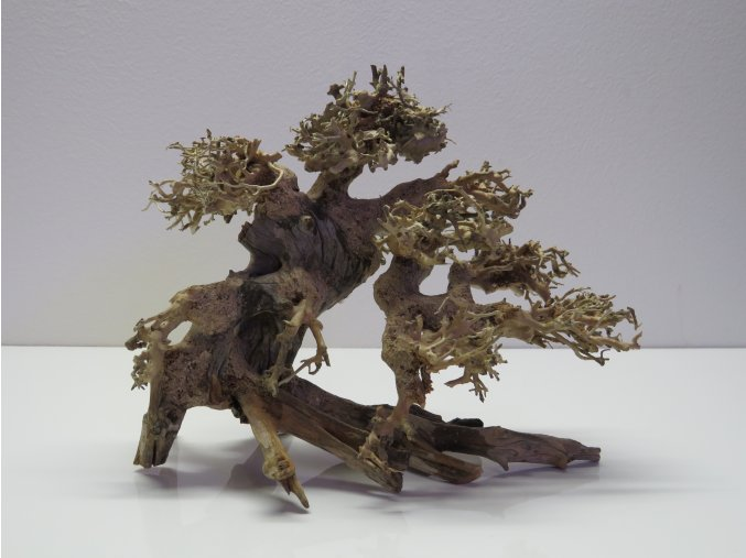 Bonsai wood S (BW35816)