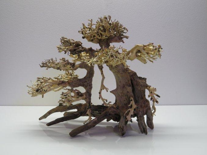 Bonsai wood M (BW40281)